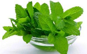 5 loại thảo dược giúp phòng bệnh ung thư hiệu…